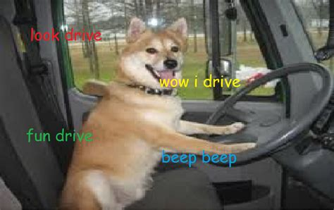 Doge Meme Shiba - the gallery for gt shiba inu doge wow