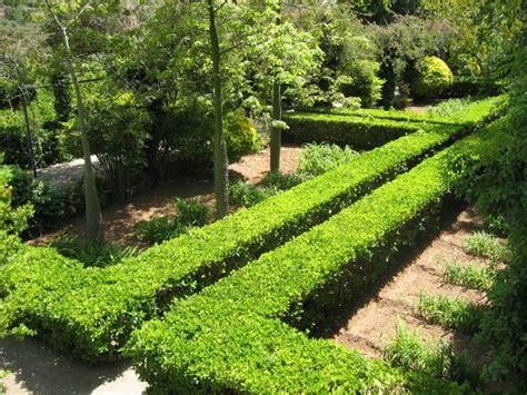 Schmale Beete Vor Hecke Und Mauer Bepflanzen by Selecci 243 N De Arbustos Para Setos De Crecimiento R 225 Pido
