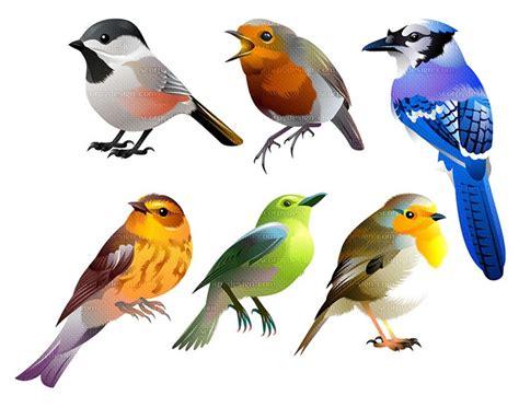 Birds Illustration birds vector illustration scorpy design
