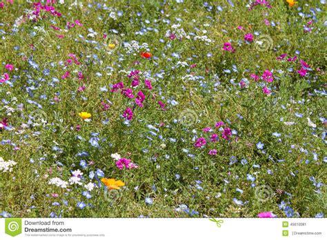 immagini prato fiorito prato fiorito fotografia stock immagine 45610081