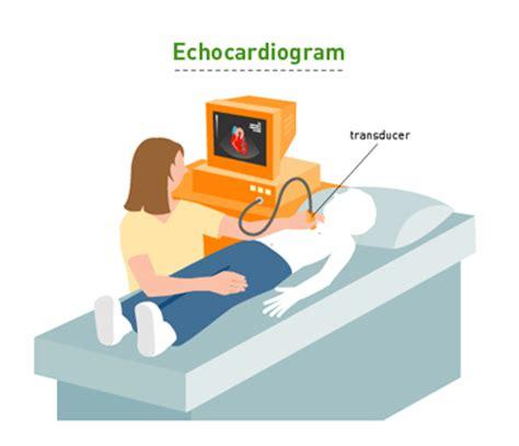test web echocardiogram web
