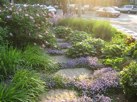 backyard ground cover ideas ground cover mazus reptans in lavender backyard