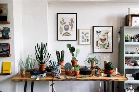 cactus para interior cactus en interiores y sus cuidados el decorador