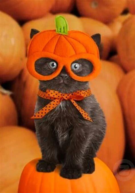 fun pet costumes  halloween     partner