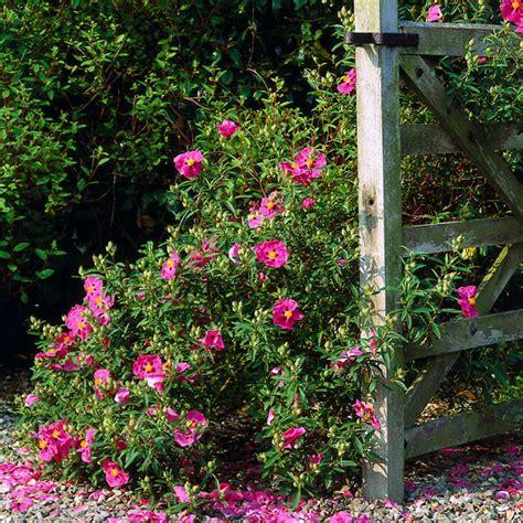 Rock Garden Plants Full Sun Rock Garden Plants Sun