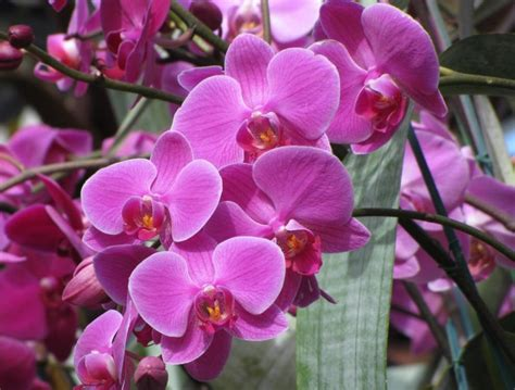 new york orchid show orchid show at new york botanical garden