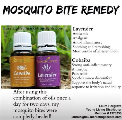 essential oils for bed bug bites 17 best ideas about mosquitoes on pinterest mosquito