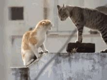 cats  dogs fighting gifs tenor