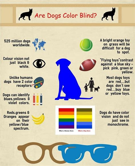 how do dogs see color are dogs color blind the question only a could answer
