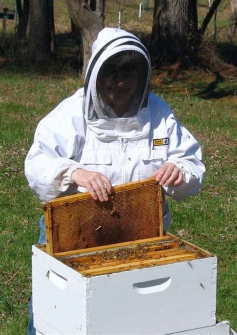 native honey bee day is saturday at greenwich audubon