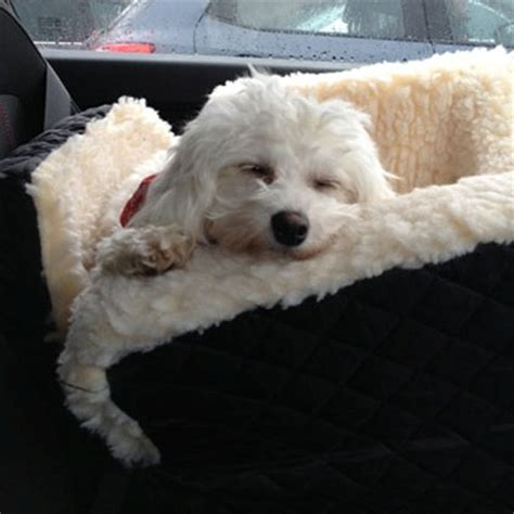 booster for dogs snoozer lookout 1 car booster seat care 4 dogs on the go