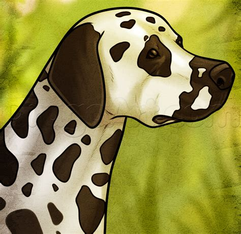 how to a dalmatian how to draw a dalmatian step by step pets animals free drawing tutorial