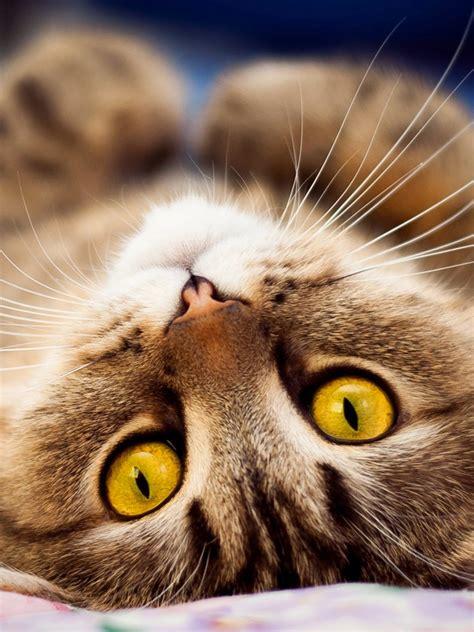 wallpaper anak kucing imut anak kucing lucu imut android wallpaper binatang