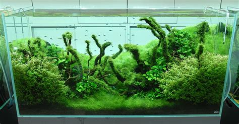 aquascape amano amano aquascaping interior design ideas