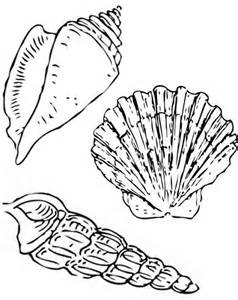 seashell color pics photos seashell match up coloring page