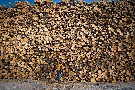 Sitemap Wood Business Canadian Forest Industries Beginner   wood business canadian forest industries canadian wood