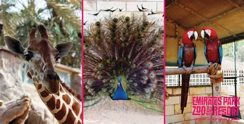 emirates zoo ticket offers emirates park zoo entry entertainment