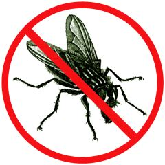 How Can Bed Bugs Live Without Air by Pest Facts