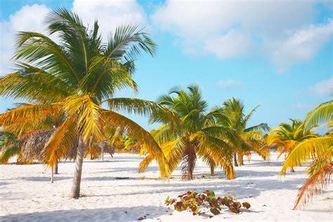 palm tree beach palm trees