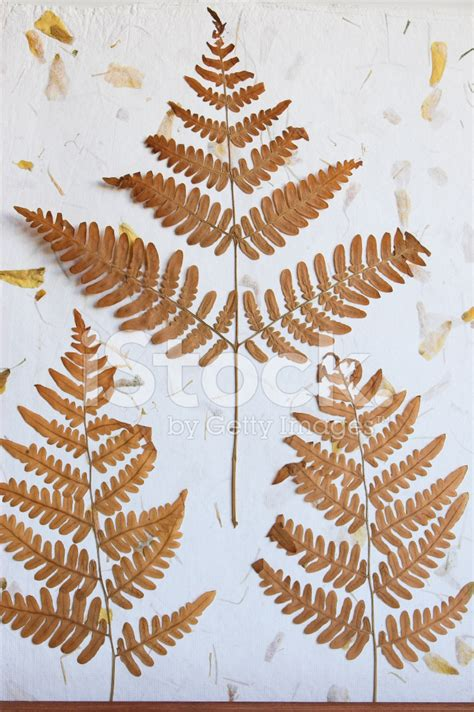 Handmade Leaf Paper - dried pressed leaves on a handmade paper bg stock photos