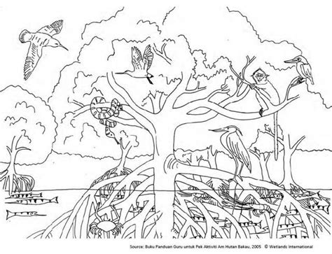 Ecosystem Coloring Pages free coloring pages of color forest ecosystem
