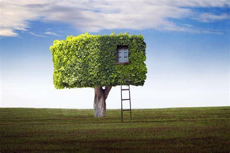 team tree house field tree house ladder wallpaper 1920x1280 79371