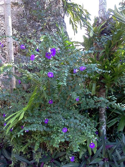 Gardening South Florida Style South Florida Hedge Plants V I Garden Bushes With Flowers