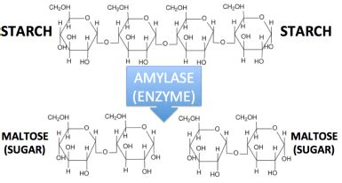 tutorial questions on enzymes enzymes tutorial flashcards and quiz sciencemusicvideos