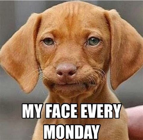 Monday Morning Meme - my face every monday funny sad mad monday monday quotes