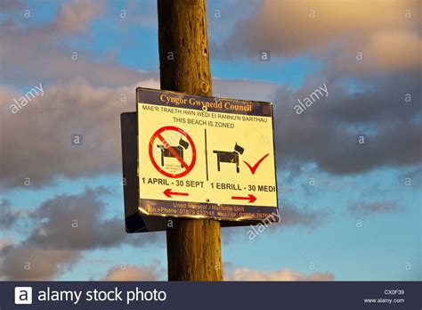 beaches where dogs are allowed sign showing area where dogs are not allowed aberdyfi aberdovey stock photo royalty