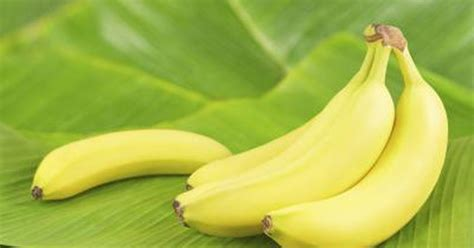 these tiny bananas banana for scale album on imgur how many calories does a small banana have livestrong com