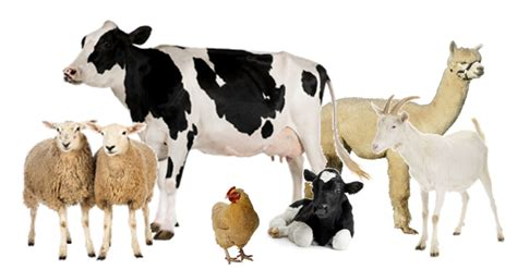 Udder Delight – New Jersey Bans Bestiality! Groupings Of Animals