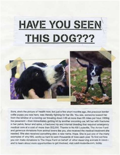 missing pet campaigns  kill louisville