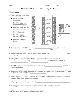 section 10 3 dna replication answers 8 3 dna replication