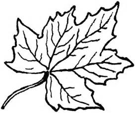 Free Maple Leaf Drawing Coloring Page  Small Large sketch template