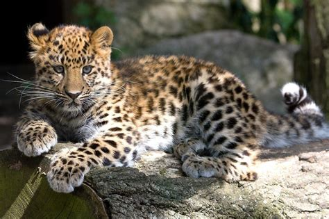 Leopard Bird leopard baby animals birds