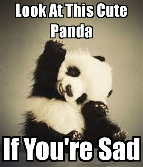 When Your Sad Meme - look at this cute panda if you re sad poster be lieve