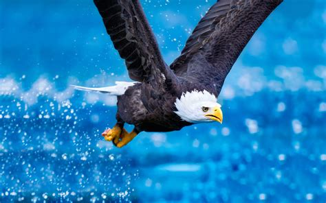 wallpaper 4k eagle bald eagle wallpapers hd desktop wallpapers 4k hd