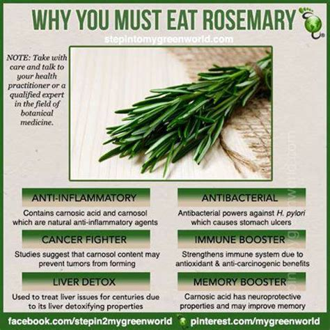 Medicinalcosmetic Uses Of Rosemary by Benefits Of Rosemary Encyclopedia Of Food For Health And