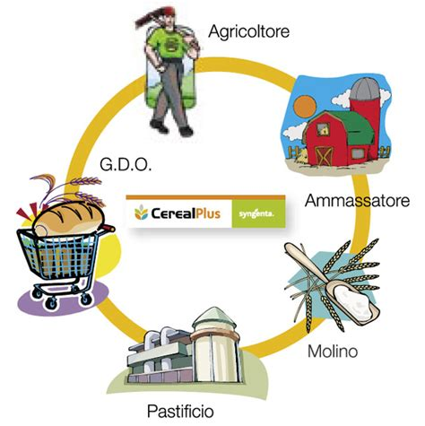 la filiera alimentare cerealplus filiera cereali concia difesa tecniche