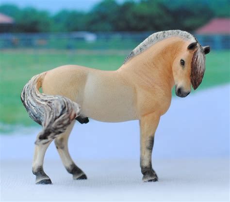 fjord horse for sale uk pin by lm photography on models pinterest horses
