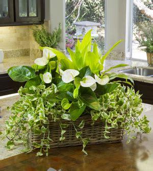 how to arrange indoor plants diy indoor garden with shopping list and map to arranging