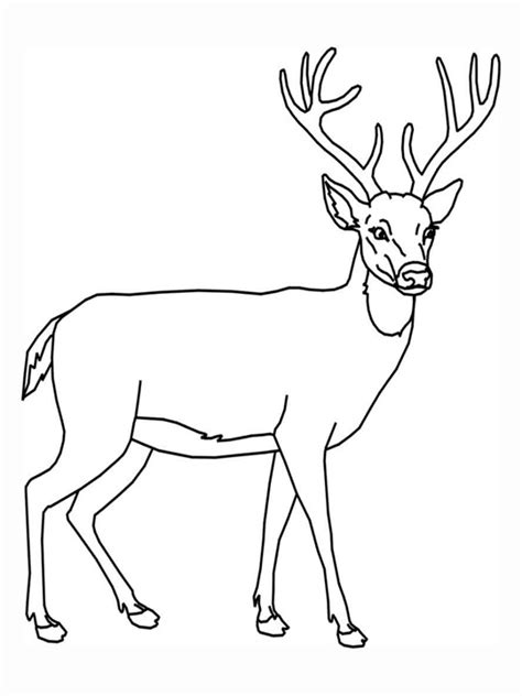 for education new animal deer coloring pages