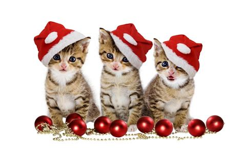 images of christmas cats pet christmas wallpaper hd android apps on google play