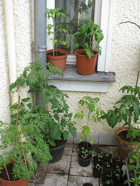 Tomaten Auf Dem Balkon 5347 by Mein Balkongarten Im Juni 2014