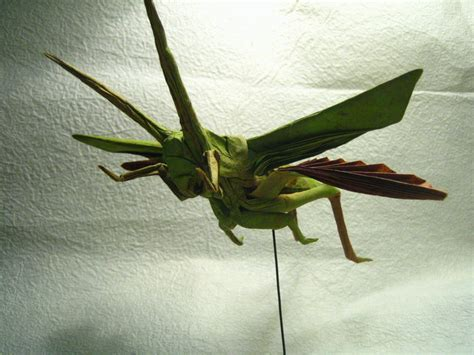 Origami Grasshopper - grasshopper flying images