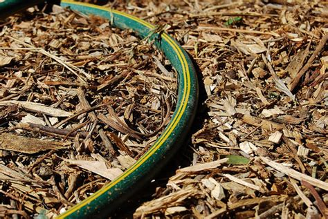 Garden Snake With Yellow Stripe Green Snake With Yellow Stripes Flickr Photo
