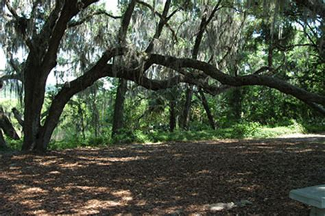 live oak of florida institute of food and