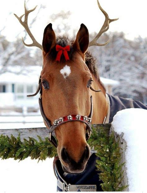 christmas decorating with horses 377 best equine decor horses images on horses animals and
