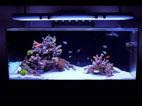 Reef Aquascape Designs by Reef Tank Aquascape Design By Fijireefrock